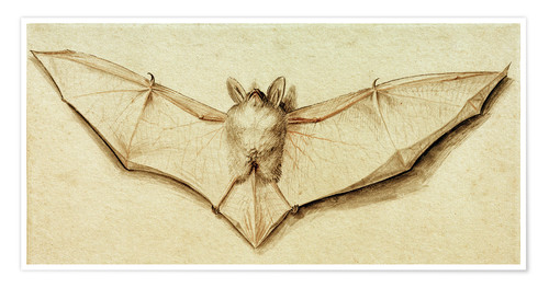 Póster Bat with spread wings