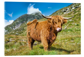 Metacrilato  Scottish Highland Cattle - Olaf Protze