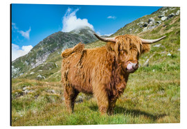 Cuadro de aluminio  Scottish Highland Cattle - Olaf Protze