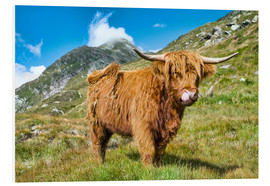 Forex  Scottish Highland Cattle - Olaf Protze