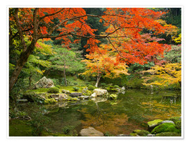 Póster Japanese garden in autumn with red maple tree