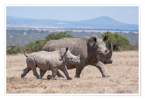 Póster White rhino with baby
