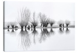 Lienzo  Willow trees in the mirror image of the flood - Ingo Gerlach
