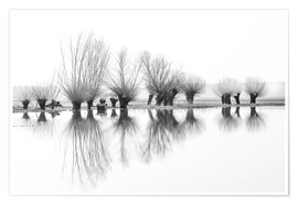 Póster Willow trees in the mirror image of the flood
