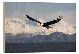 Cuadro de madera  Bald Eagle in Flight - David Northcott