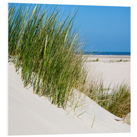 Cuadro de PVC  Dunes with grass at the coastline of the german island Norderney (Germany) - gn fotografie