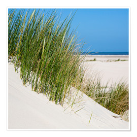 Póster Dunes with grass at the coastline of the german island Norderney (Germany)