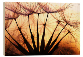 Cuadro de madera  Dandelion in the sunset II - Julia Delgado