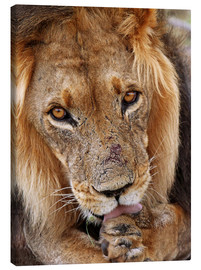 Lienzo  View of the lion - Africa wildlife - wiw