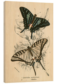 Cuadro de madera  Butterflies - English School
