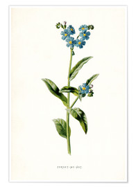 Póster Forget-Me-Not