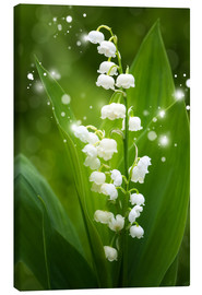 Lienzo  Lily of the valley - Steffen Gierok