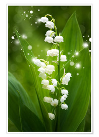 Póster  Lily of the valley - Steffen Gierok