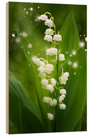 Cuadro de madera  Lily of the valley - Steffen Gierok