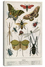 Lienzo  Insects - English School