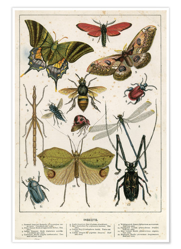 Póster Insects