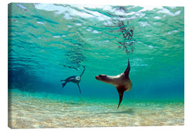 Lienzo  Sea lion lagoon Galapagos Islands - Paul Kennedy