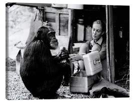 Lienzo  Jane Goodall con el chimpacé David Greybeard