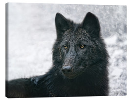 Lienzo  the black wolf - Joachim G. Pinkawa