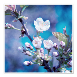 Póster  CHERRY BLOSSOM - INA FineArt