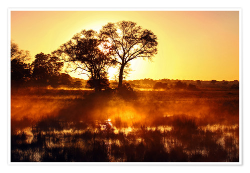 Póster Morning in Africa