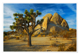 Póster  Joshua tree and rock - Charles Gurche