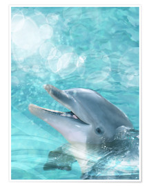Póster Dolphin - Humor