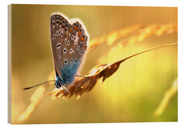 Madera  Butterfly in late summer - Julia Delgado