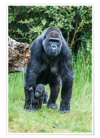 Póster Mama Gorilla with Baby Gorilla