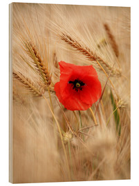 Cuadro de madera  Red poppy in wheat field 2 - Falko Follert