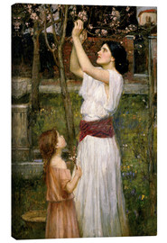 Lienzo  Recogiendo flores del almendro - John William Waterhouse