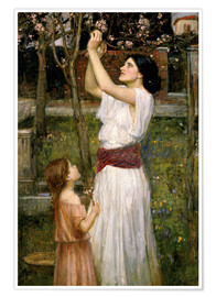 Póster  Recogiendo flores de almendra - John William Waterhouse