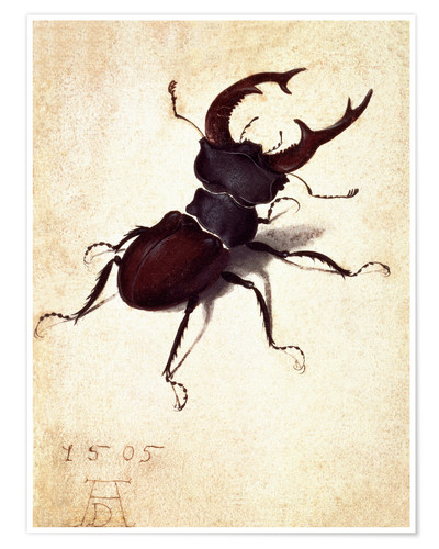 Póster Stag beetle