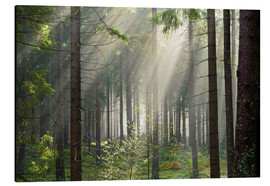 Cuadro de aluminio  Sun rays in the forest - Dave Derbis