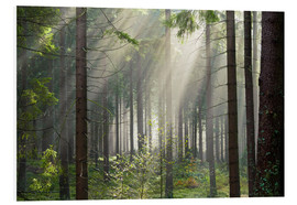 Cuadro de PVC  Sun rays in the forest - Dave Derbis