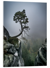 Cuadro de metacrilato  Lonely Tree on the Brink - Andreas Wonisch