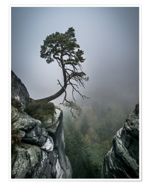 Póster  Lonely Tree on the Brink - Andreas Wonisch