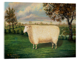 Metacrilato  A Prize Sheep of the Old Lincoln Breed, 1835 - W. Adamson