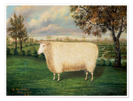 Póster  A Prize Sheep of the Old Lincoln Breed, 1835 - W. Adamson