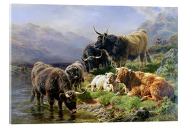 Metacrilato  Highland Cattle - William Watson