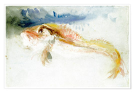 Póster  A Gurnard - Joseph Mallord William Turner