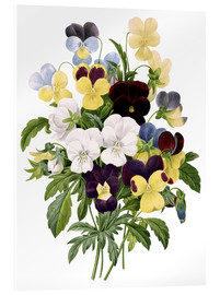 Cuadro de metacrilato  Bouquet of Pansies - Pierre Joseph Redouté