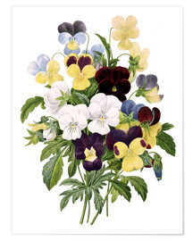 Póster Bouquet of Pansies