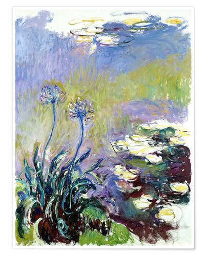 Póster The Agapanthus