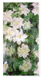 Póster White Clematis