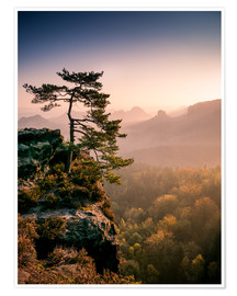 Póster  Lonely Tree at Sunrise - Andreas Wonisch