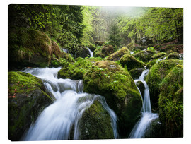 Lienzo  Wild Creek in German Black Forest - Andreas Wonisch