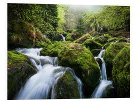 Forex  Wild Creek in German Black Forest - Andreas Wonisch