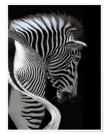 Póster african stripes II