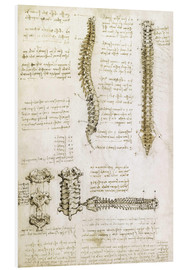 Forex  The spine - Leonardo da Vinci